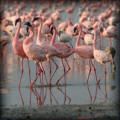 Kenia prive rondreis | 7 daagse Flamingo safari
