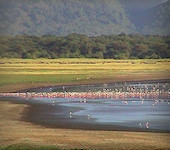 Lake Manyara Nationaal Park