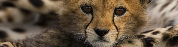 OnsKenia.nl maatwerk avontuurlijke prive rondreizen in Kenia en Tanzania