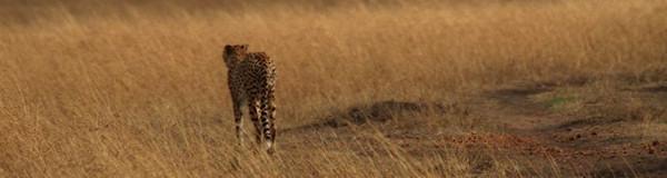 OnsKenia Safaris maatwerk avontuurlijke prive rondreizen in Kenia en Tanzania