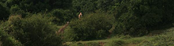 OnsKenia maatwerk prive safari rondreizen door Kenia en Tanzania