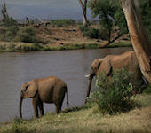 Samburu en Buffalo Springs nationaal reservaat Kenia