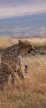 onskenia, safari parken in kenia en tanzania informatiesafari parken tanzania