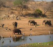 Mdonya River Camp, Ruaha Nationaal Park Tanzania